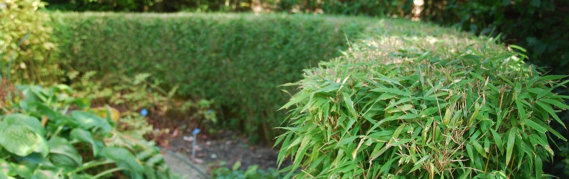 Bambushecke schneiden