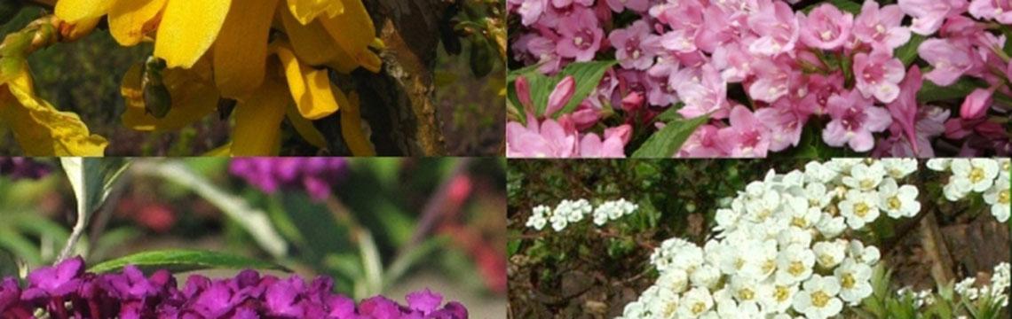 Gartenpflanzen Katalog