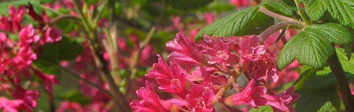 Pflegeleichte, natürliche Gärten