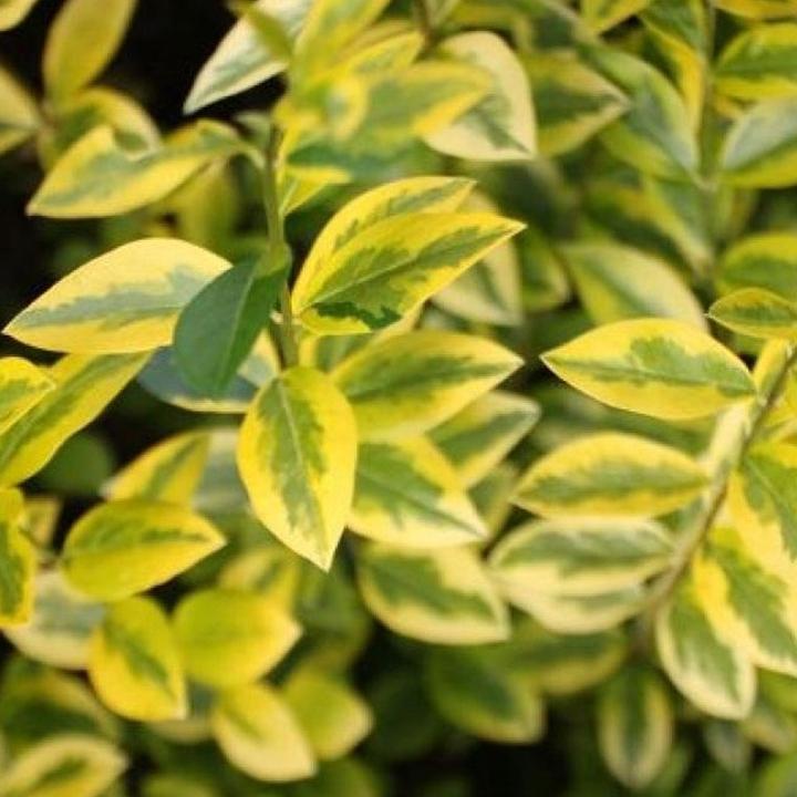 Richtige Pflanze auswählen